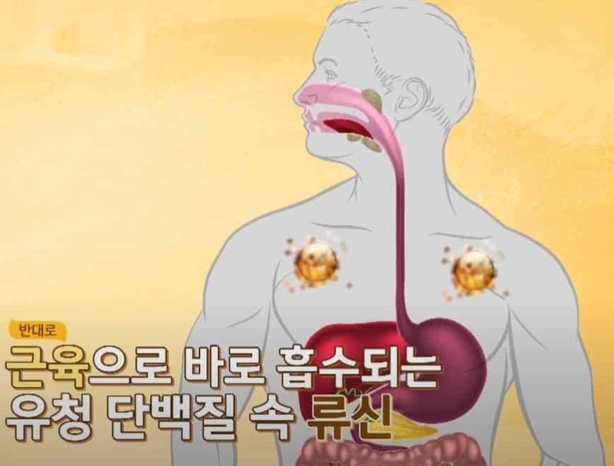 유청 단백질 효과- 근육생성