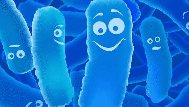 유산균 이란